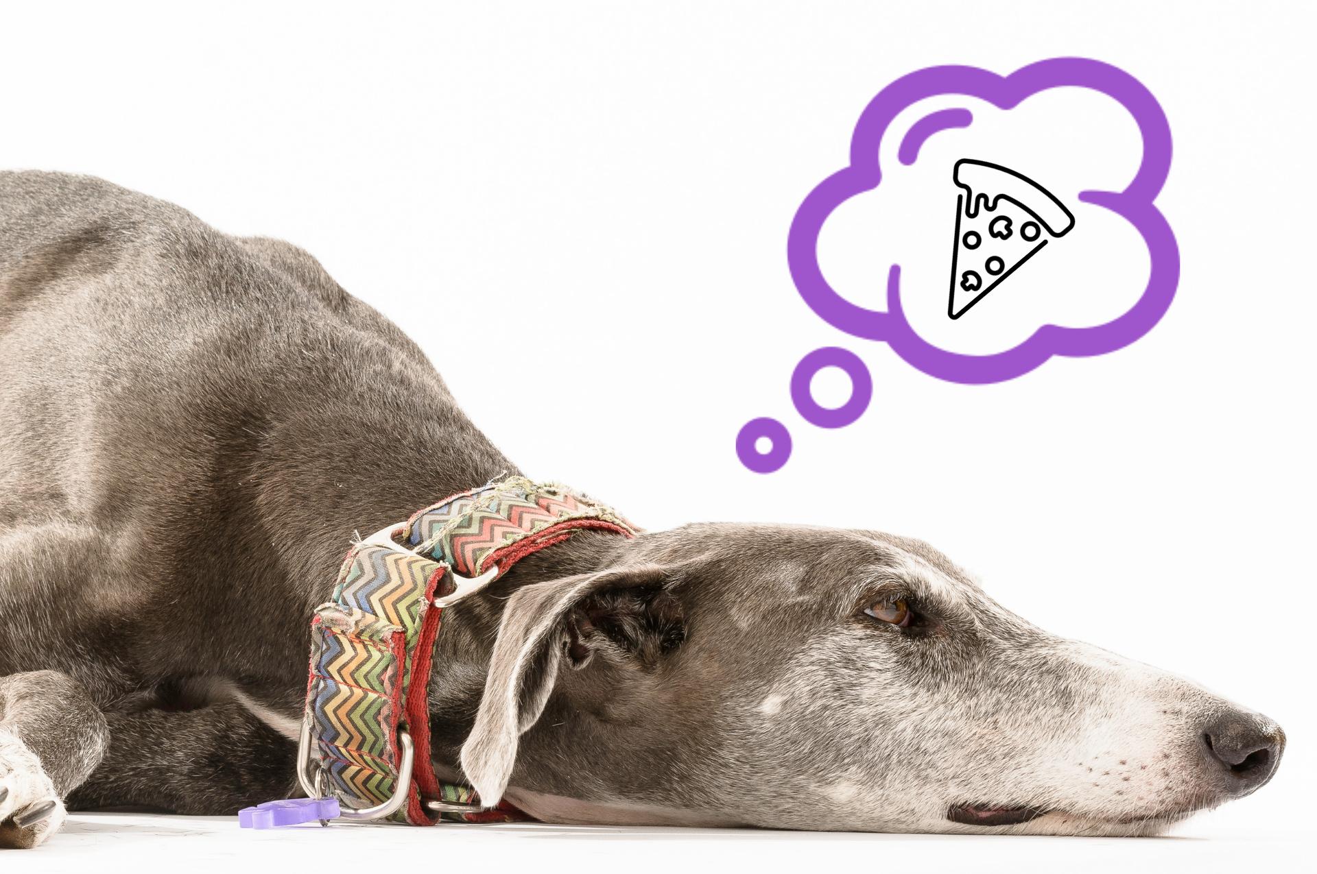 Método Cognitivo-Emocional como base para trabajar con perros