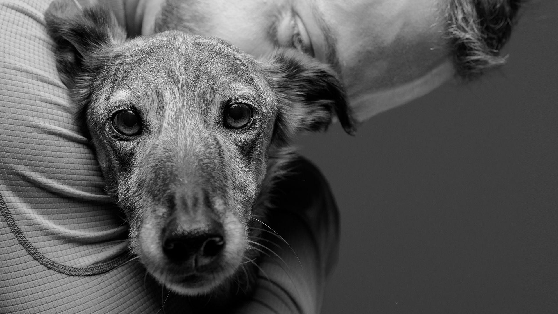 ¿QUÉ HACER CON NUESTRO PRIMER (O NUEVO) COMPAÑERO CANINO? PARTE 1: RESPONSABILIDADES LEGALES